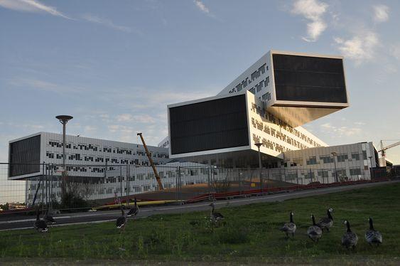 TURISTER: Canada-gjess på sightseeing ved det nye Statoil-bygget på Fornebu.