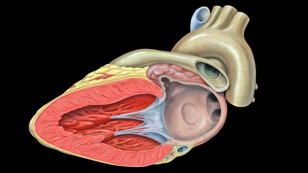 Svenske forskere har  datamodellert blodgjennomstrømningen i et menneskehjerte.