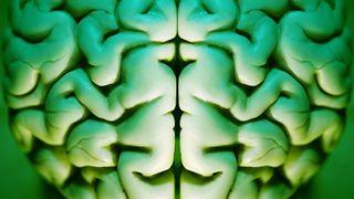 Kan programmering av celler reparere hjerner?