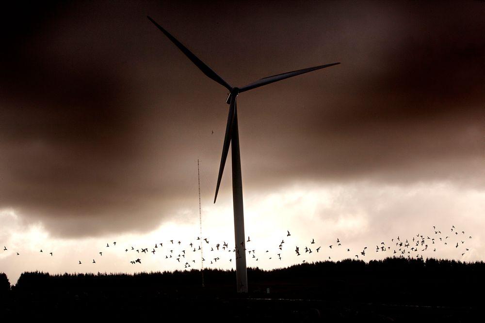 Skal finne ut når vinden blåser