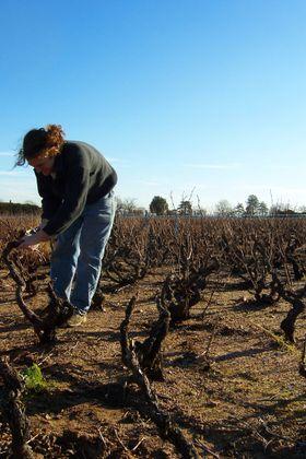Richard Rottiers tar også i et tak i vinmarken.