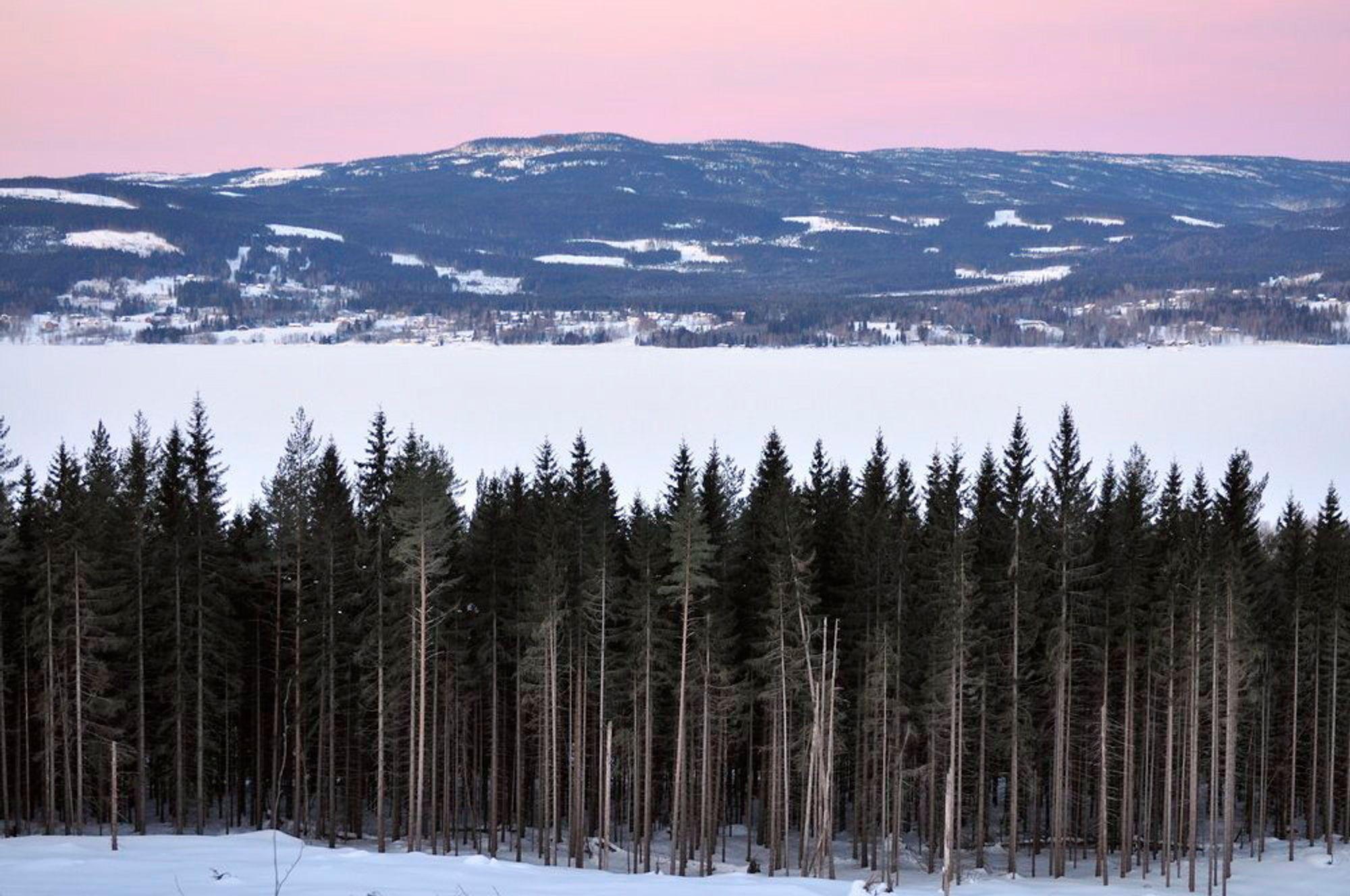 Vinter, morgen ved Hurdalssjøen. Furuskog. Alpenglow over Hurdalsåsene. Tatt fra mot vest. Hurdal, Romerike, Akershus.Foto: © Øystein Søbye / NN / Samfoto