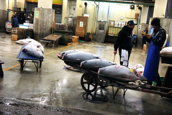 LITE EFFEKTIVT: Tokyos fiskemarked Tsjuki er viden kjent og et attraktivt turistmål. Måten det fungerer på er nok likevel gammeldags. Her auksjoneres tunfisk klokken fem om morgenen.