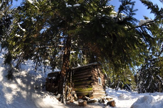 SKJULT: Grytehytta ligger godt gjemt under et grantre. Foto: Fredrik Drevon