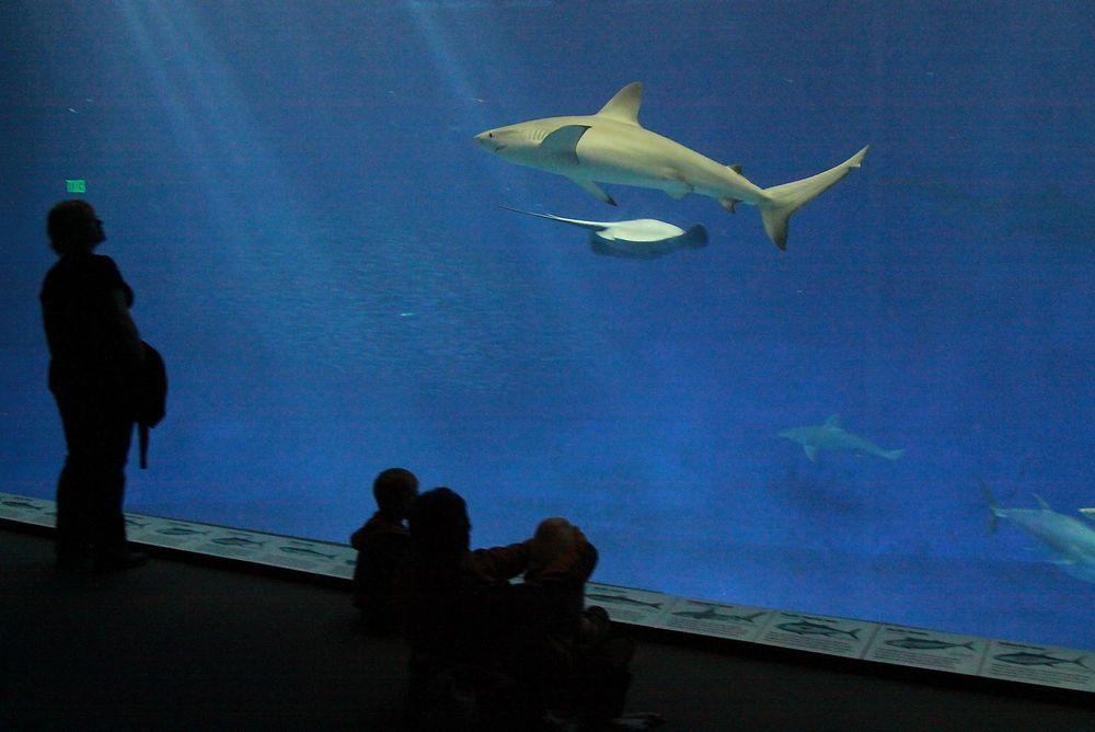 Bjørvika kan få akvarium. Oslo kommune har lagt mulighetsstudien ut på anbud i dag. ILLUSTRASJONSFOTO: colourbox.com