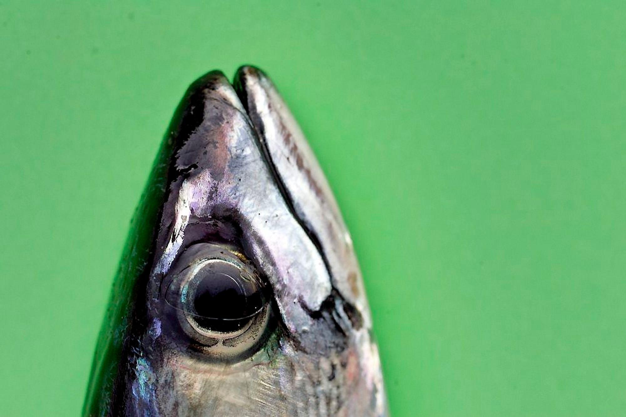 Statoil tar hensyn til fiskerne som dorger etter makrell, og innstiller seismikkaktiviteten på Kvitebjørnfeltet i Nordsjøen.
