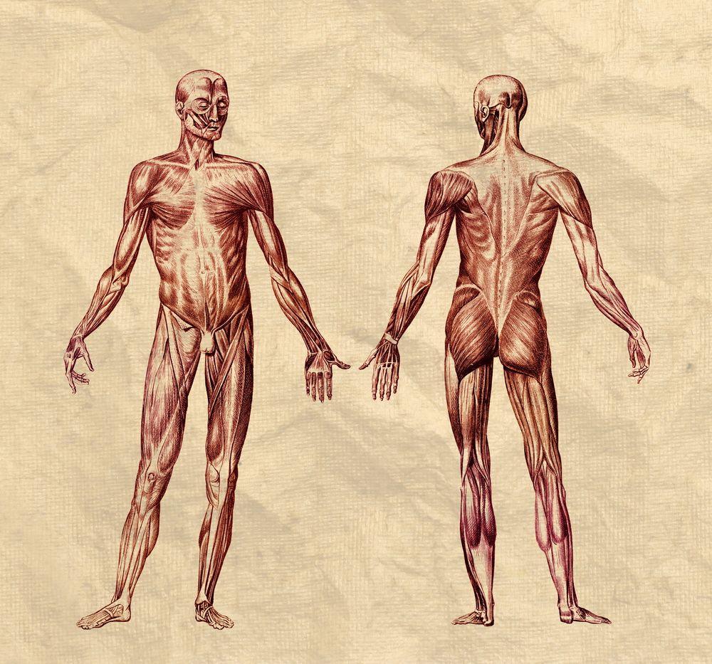 Kroppens sammensetning kan identifisere deg.