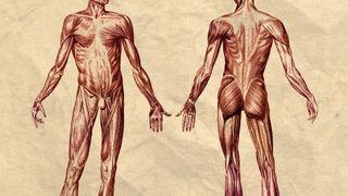 Fett og muskler forteller hvem du er