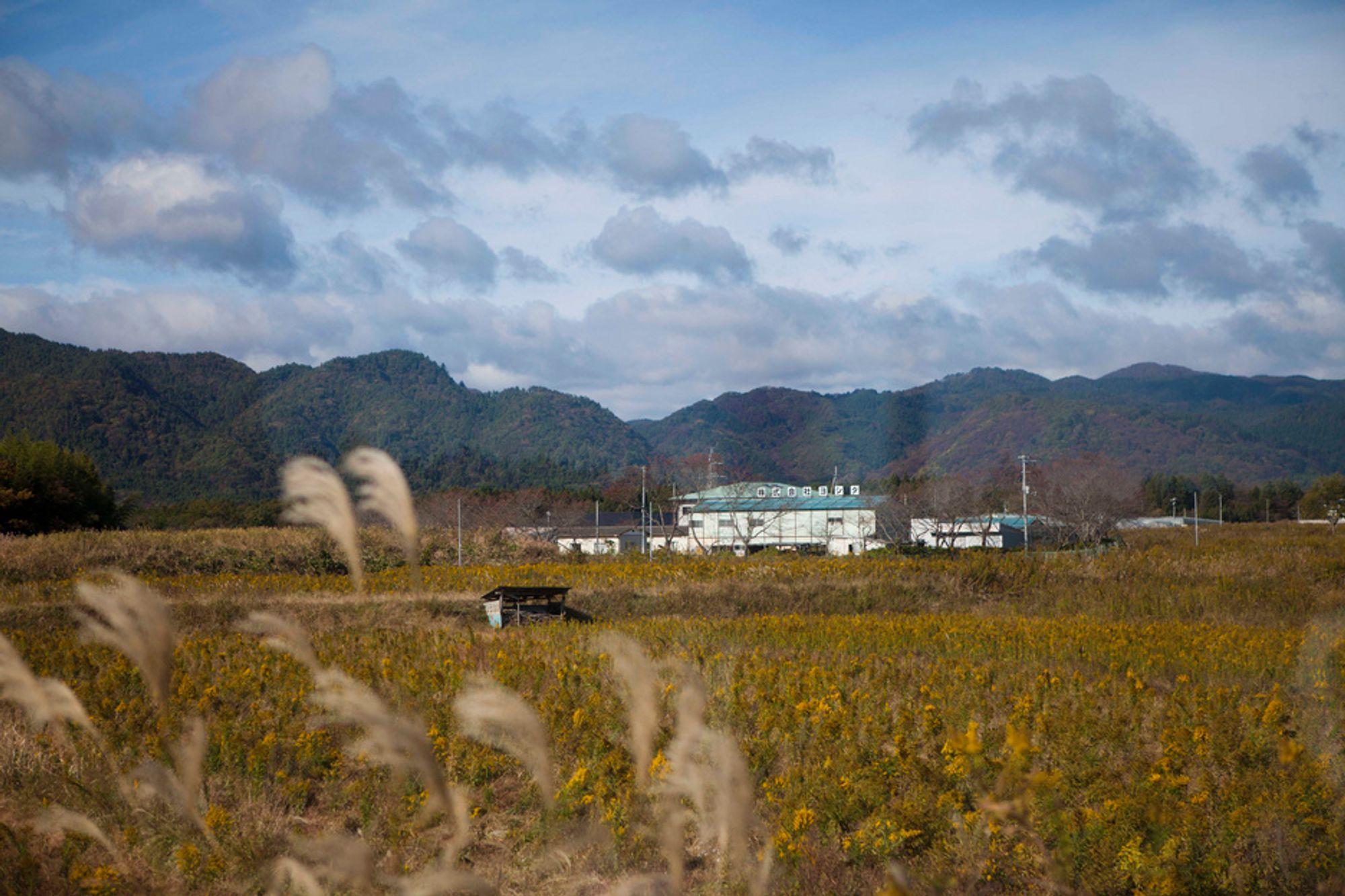 HARDT RAMMET: En åker ligger brakk i nærheten av det katastroferammede atomkraftverket Fukushima Daiichi nordøst i Japan. Store jordbruksområder i denne regionen er så sterkt forurenset av radioaktivitet, at de ikke lenger kan brukes til produksjon av matvarer, advarte fagfolk tirsdag. Regionen ble 11. mars i år rammet av et jordskjelv og en tsunami, og kraftverket fikk store skader.