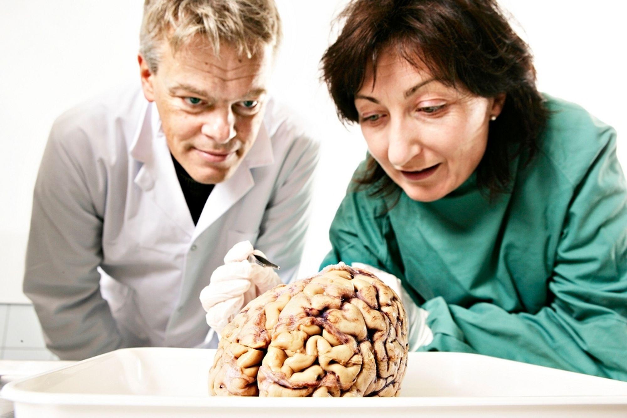 Professorene Edvard og May-Britt Moser ved The Kavli Institute for Systems Neuroscience (KI) / Centre for the Biology of Memory (CBM) kan se frem mot en tidobling av laboratoriearealene med nye midler fra NTNU.