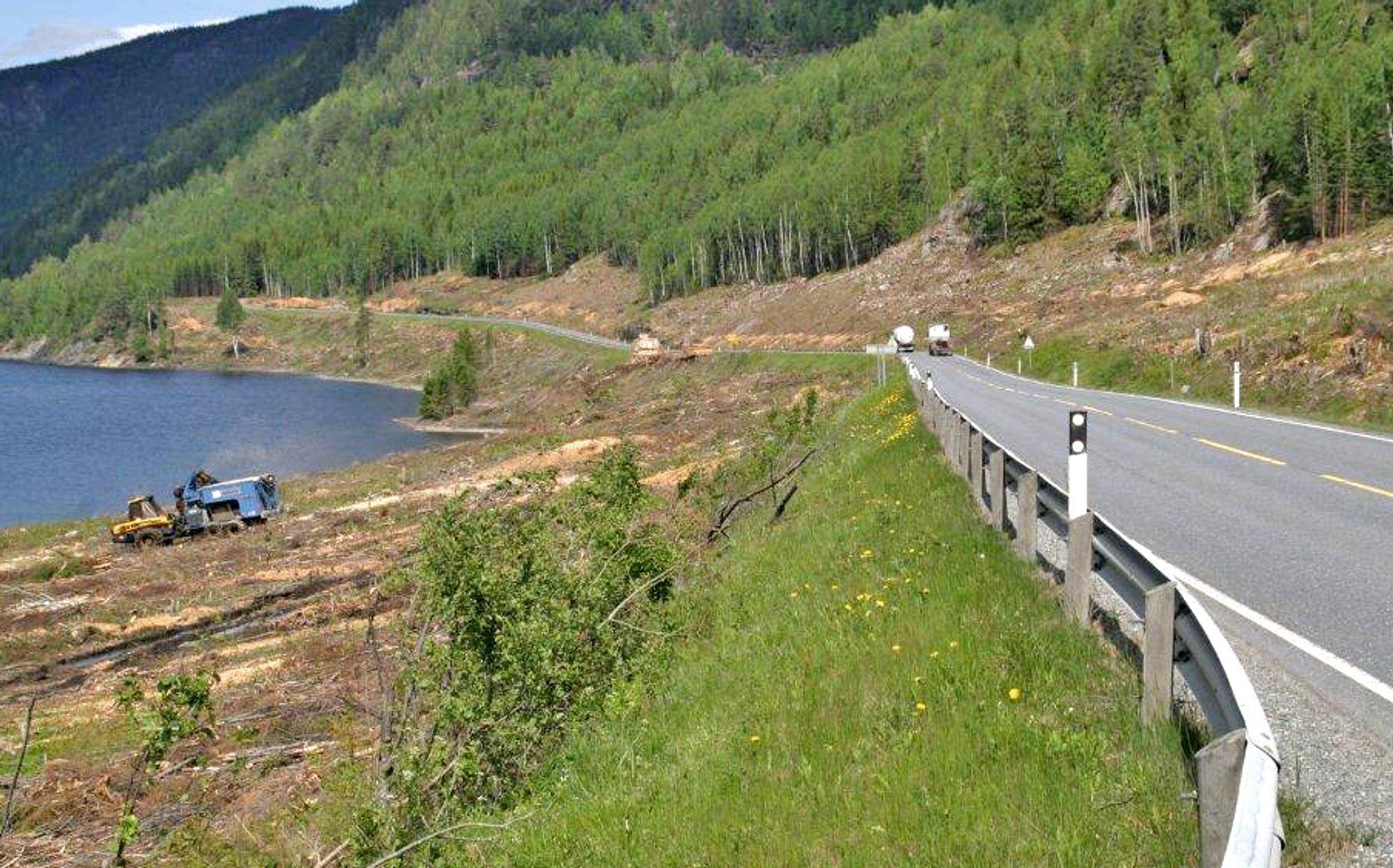 Skogryddingen er godt i gang ved Ørgenvika hvor den nye riksveg 7 skal ta av fra nåværende veg.