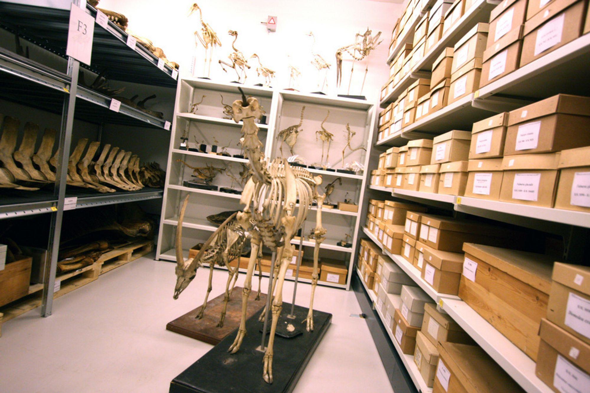 Bergen Museum har tatt i bruk høyteknologiske hjelpemidler for å bevare sine vitenskapelige samlinger.