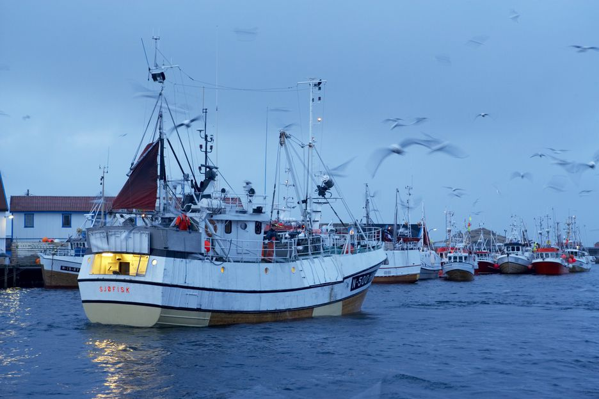 LITE FISKEDØD: Fiskerne i Lofoten har stort sett bare arealkonflikter å frykte ved oljeboring.