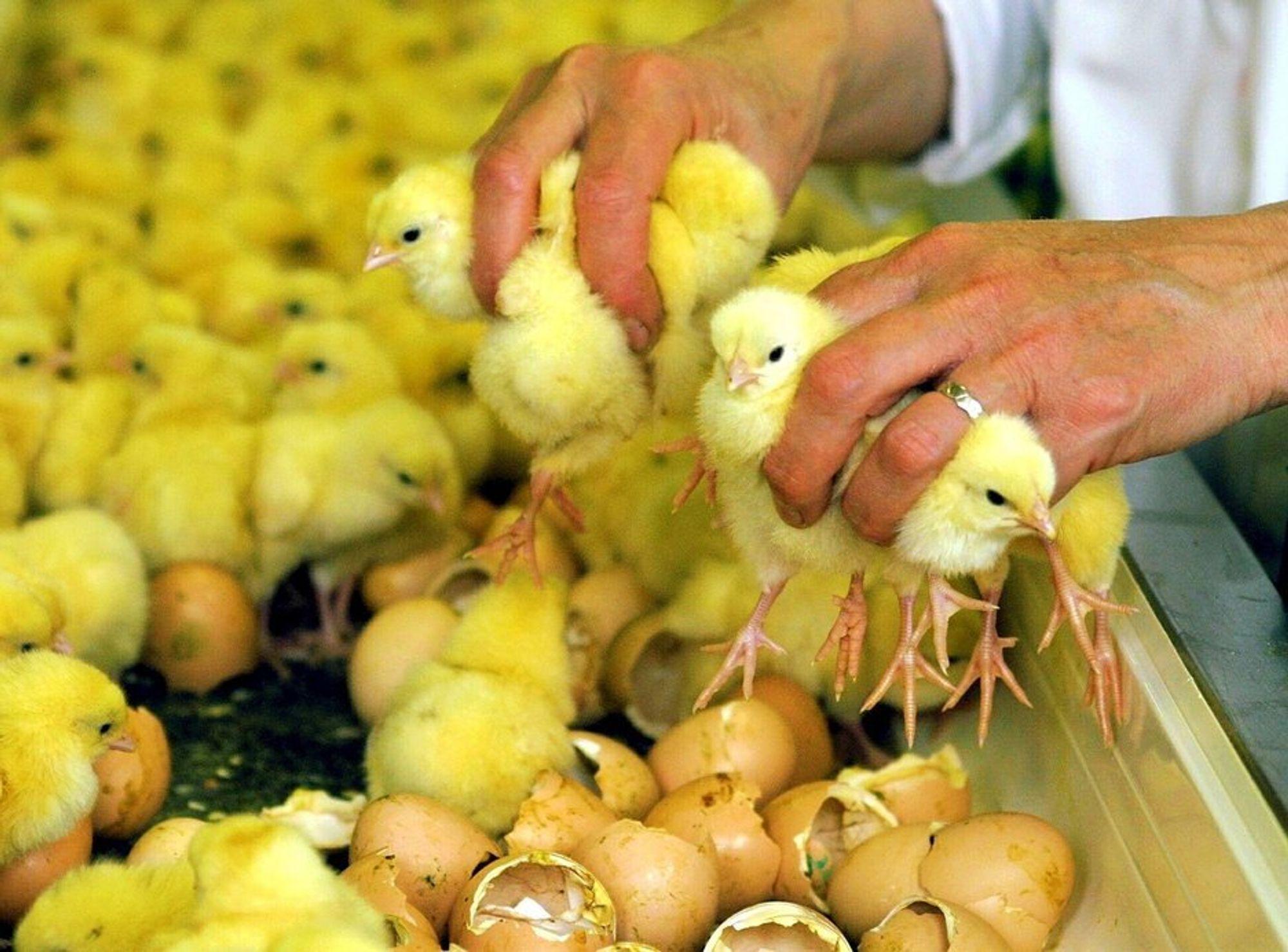 GIFTIG AVFALL: Avfall fra biodiesel-produksjon har i årevis blitt tilsatt tysk dyrefôr.