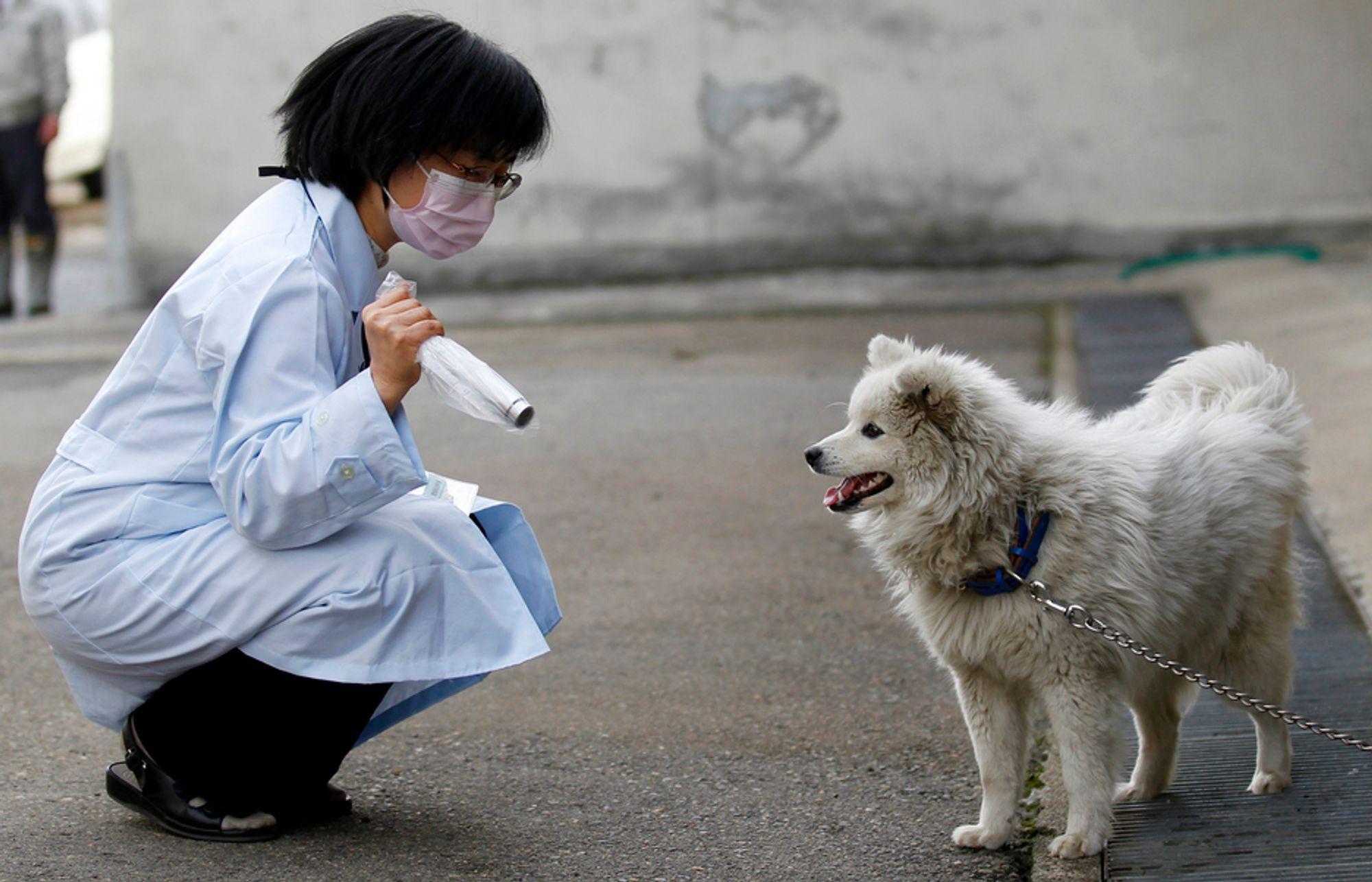MÅLER STRÅLING: Doktor Keiko Yamada sjekker en hund fra Fukushima for radioaktivitet i Yonezawa rundt 100 km unna. I går skjedde et nytt skjelv som skal ha ført til lekkasjer av radioaktivt vann ved et annet kjernekraftverk.
