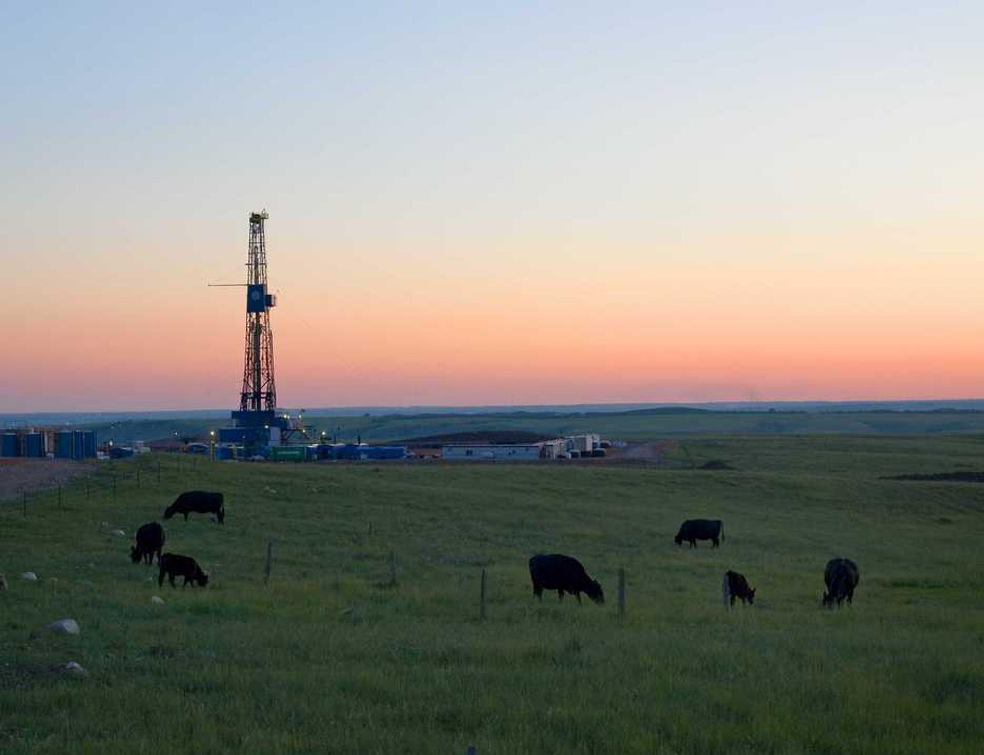 Statoil skal bore blant kuer og lykkejegere i Nord Dakota.
