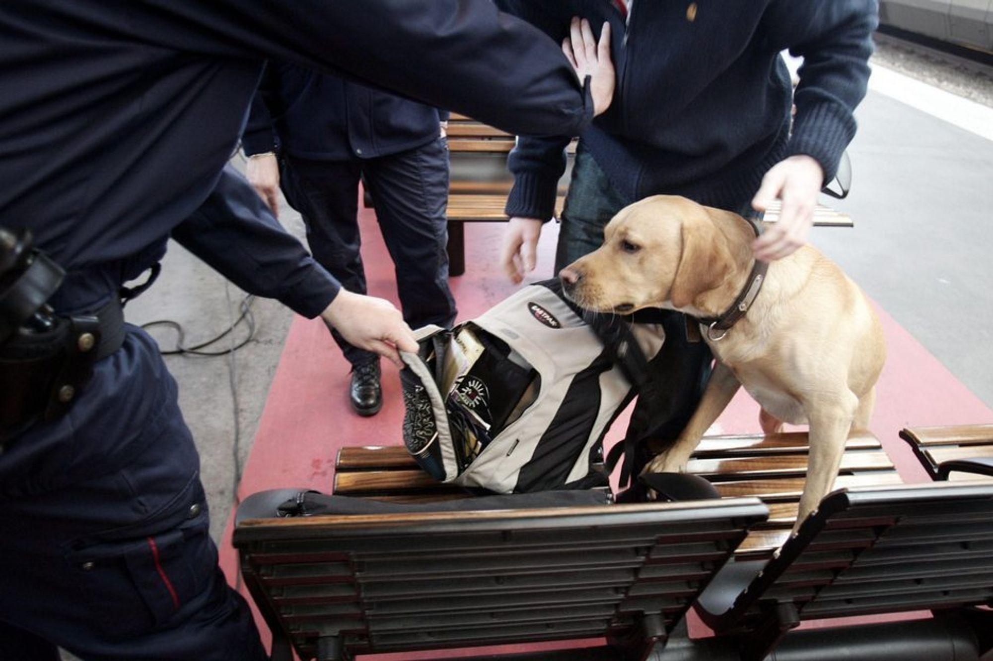 FIKK NEI: Forsvarets hundeskoles tjenester ble ikke vurdert som nødvendige hverken før eller etter terrorangrepet 22. juli.