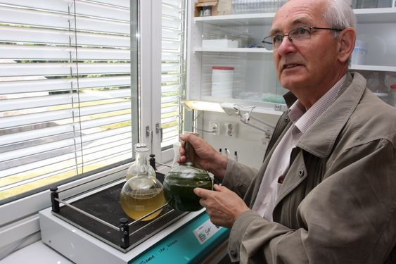 KOMPLISERT: Det er noe helt annet å dyrke alger i kolber, enn å oppskalere dyrkningseffektiviteten til industriell skala, framholder UMB-professor Hans Ragnar Gislerød.