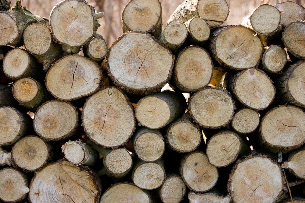 1,7 millioner kubikkmeter tømmer skal ha blitt kuttet ned ulovlig, siden hackere kom seg inn i systemene til brasilianske myndigheter.