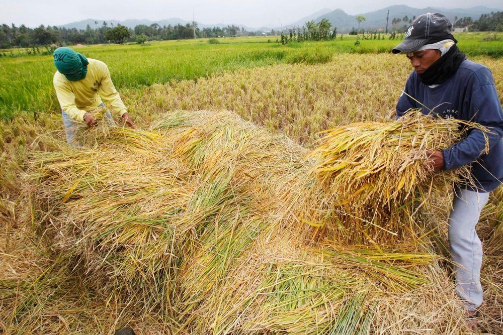 Ekspertene mener faren for radioaktivt nedfall er relativt liten i Japans naboland, men slikt nedfall vil kunne få store følger for matproduksjonen i mange land.