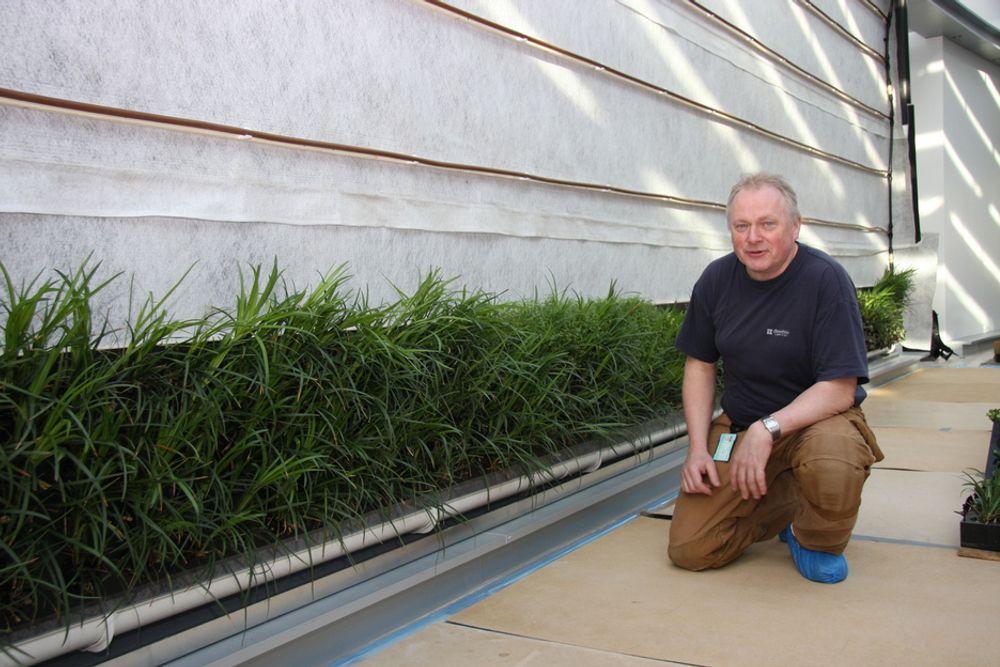 LEVENDE VEGG: Arvid Ekle foran det han kaller en levende vegg. Den grå fiberduken tar opp overskuddsvann og fører det ned til en takrenne som kan skimtes nederst i bildet. Rørene er koplet til et styringssystem med sensorer som sørger for alt alle planter for like mye vann, uavhengig av hvor på veggen de er plassert.