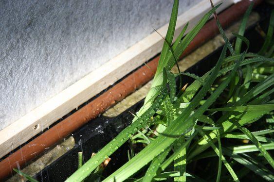 STEINULL: Plantene vokser i steinull. Alt de trenger i form av vann og næring tilføres via rørsystemet. Bildet viser hvordan røret går rett over steinullen som trekker til seg vannet. Grunnen til at det er mye og overføldig bann på bildet er at det er tatt under en lekkasjetest.