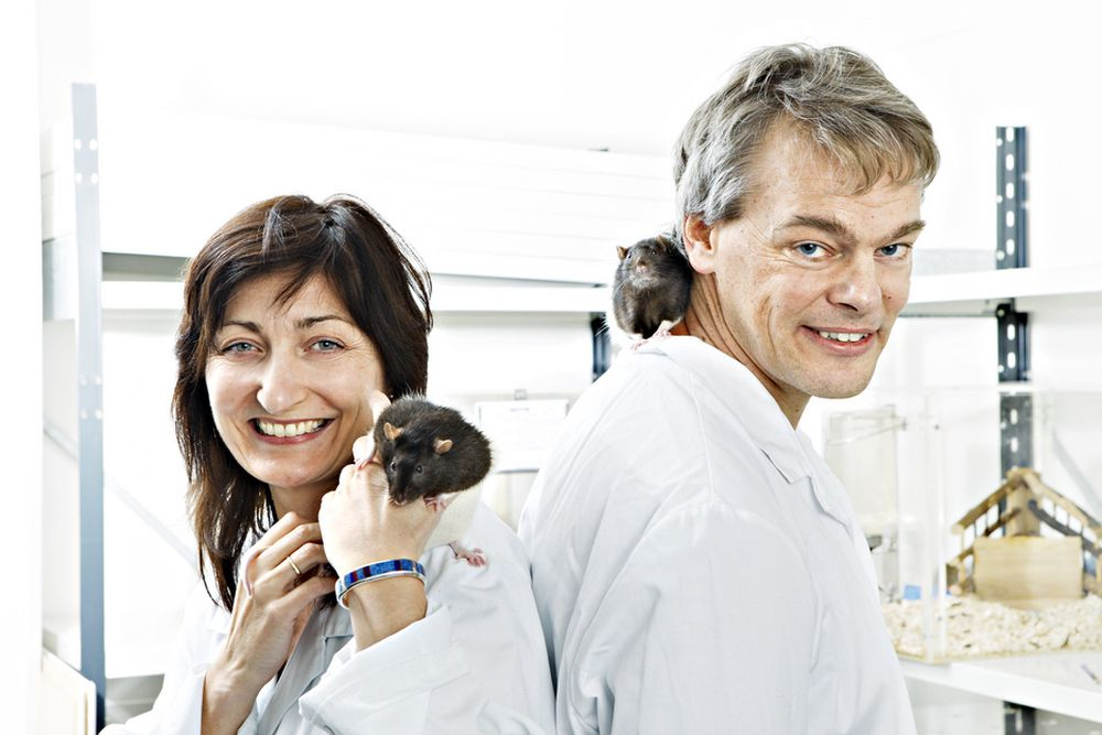 May-Britt og Edvard Moser får internasjonal pris for sin forskning på gridceller i hjernen.