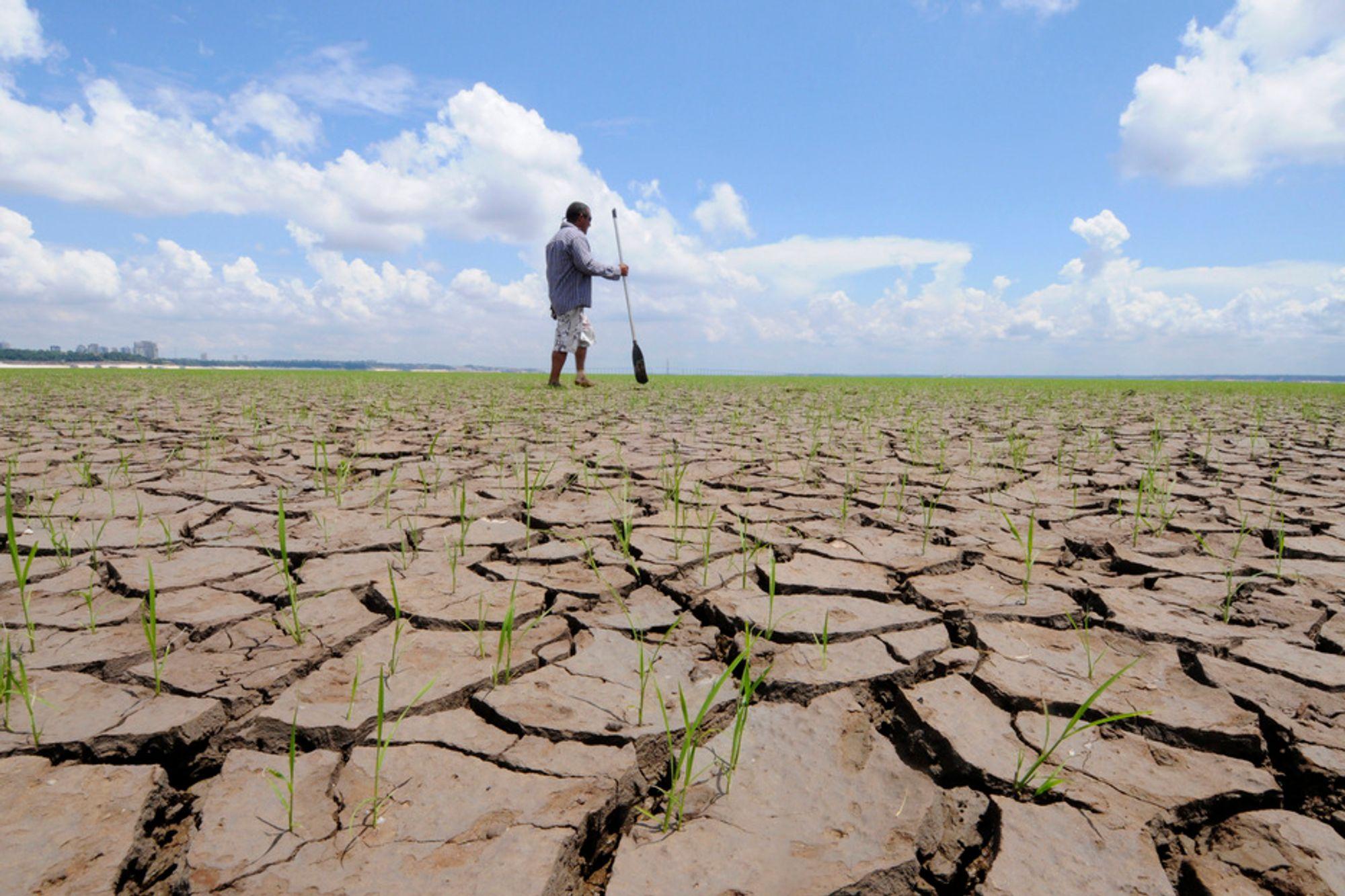 INNTØRKEDE ELVER: En mann krysser en uttørket sideelv til Amazonas i Brasil. Uvanlig tørke har ført til at vannstandene i elvene i området er rekordlave. Samtidig viser temperaturmålinger over hele verden at 2010 så langt er et av de varmeste årene siden målingene begynte i 1880.