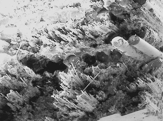 Mikroskopbilde av Oddvar Brå-stav