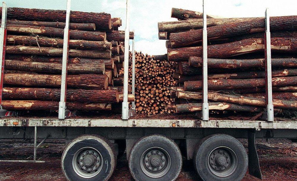 Tømmeret som Moelven divisjon Timber sager til trelast må selges billigere og konsernet har tjent 360 millioner kroner mindre enn i fjor så langt i 2008.