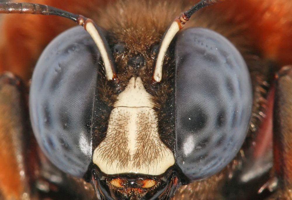 BIESYN: Tyske forskere har gjenskapt biesyn med katadioptrisk optikk og et kuppelformet speil.
