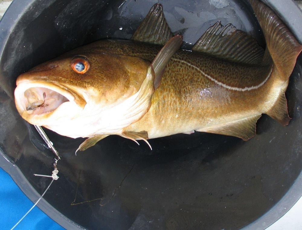 TILLIT: Folk var tilbøyelige til å handle mer fisk når de fikk vite hvor den kom fra.
