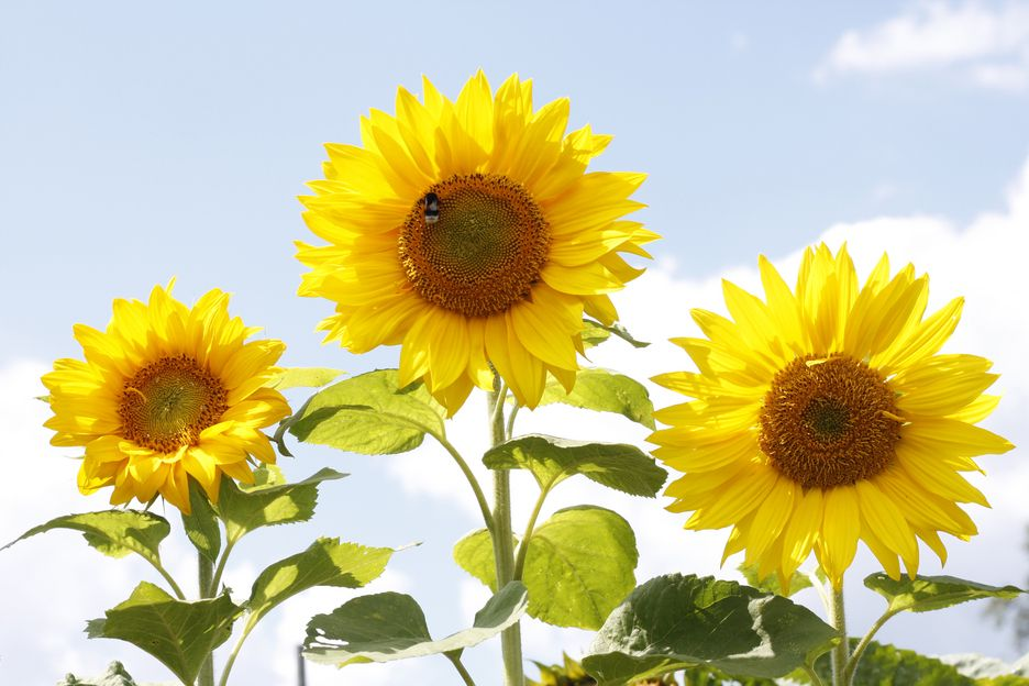 De store dosene man må bruke av naturlige plantevernmidler gjør dem like skadelige som andre midler.
