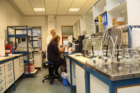 FLERE LABORATORIER: Kjemisk analyse er et sentralt ledd i Inpac-produksjonen. På bildet: Grete Olaussen og Eli Kongsrud (bak).