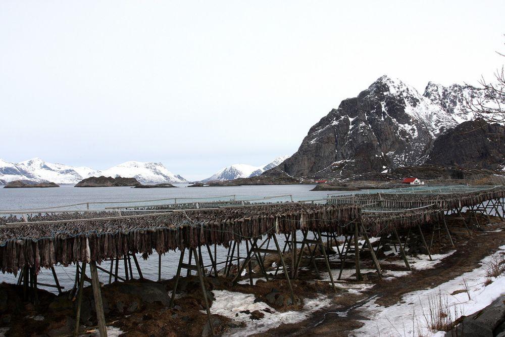 FOR: To av tre spurte i en spørreundersøkelse vil ha konsekvensutredning av oljevirksomhet i Lofoten og Vesterålen.