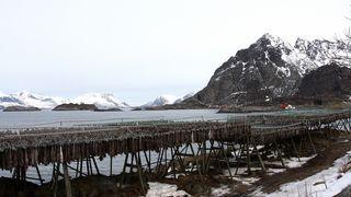 Flertall for Lofoten-utredning