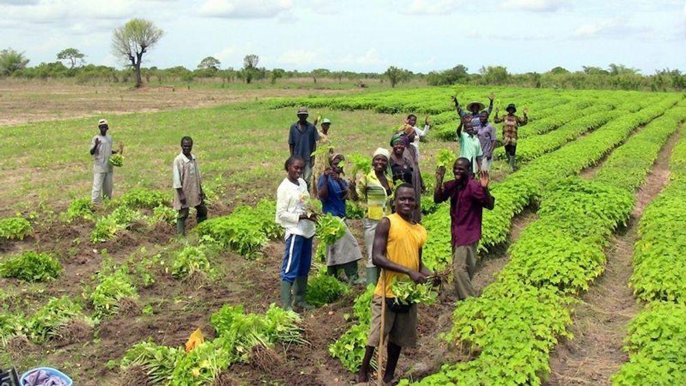 Norske BioFuel mener å ha bidratt til mer matproduksjon i Ghana med sin jatropha-produksjon.