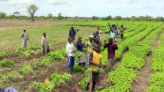 – Biodrivstoff gir mat i Ghana