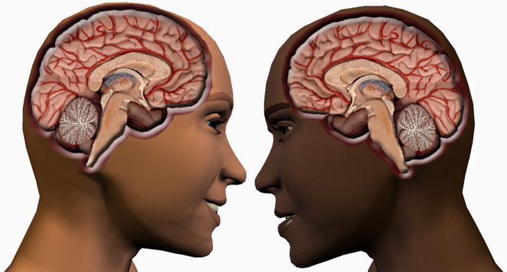 BLIR LIKE: Jentehjerner blir som guttehjerner når det gjelder seksuell adferd og aktivitetsnivå. I alle fall dersom likhetene mellom mann og mus er så store som forskerne vil ha det til.