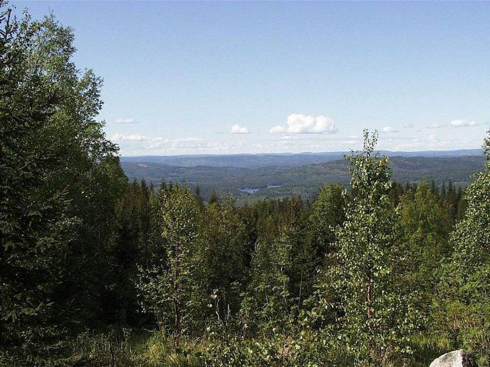 HASTER: Enkelte skogtyper er truet av ødeleggende hogst og utbygging, mener Naturvernforbundet.