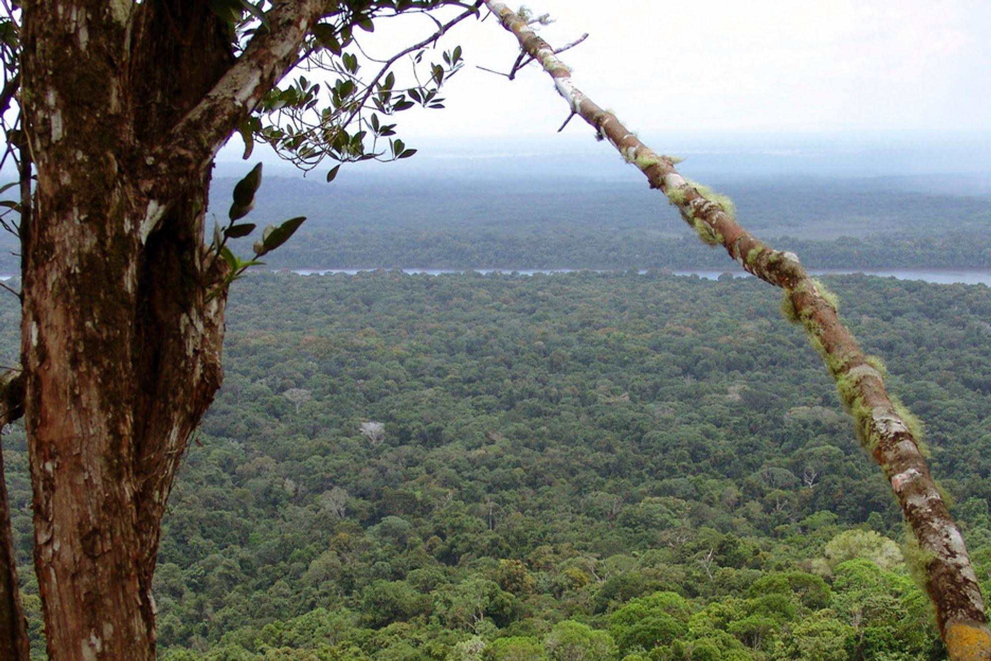 Avskoging står for 20 prosent av verdens CO2-utslipp, mer enn alle utslipp fra land-, sjø- og lufttransport til sammen.