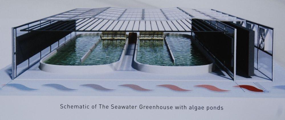 ALGER: Slik ser Bellona for seg produksjon av alger til biodrivstoff i Sahara. Nå satser også StatoilHydro på alger, men da i USA.