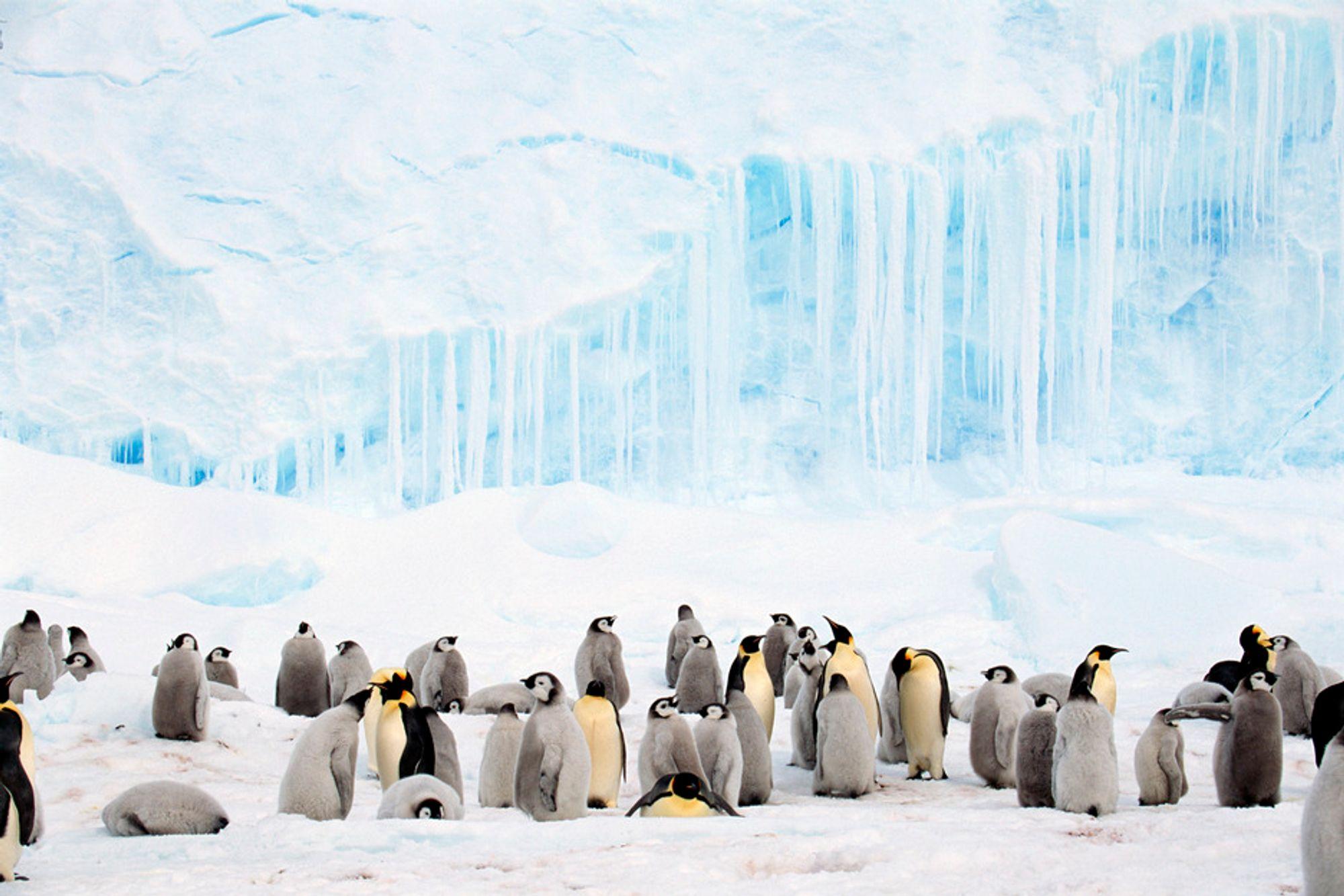 """Foreløpig er det stort sett bare pingviner i Antarktis, men om spådommene til """"Forum for the future"""" slår til, kan de få selskap av millioner av flyktninger frem til 2040."""