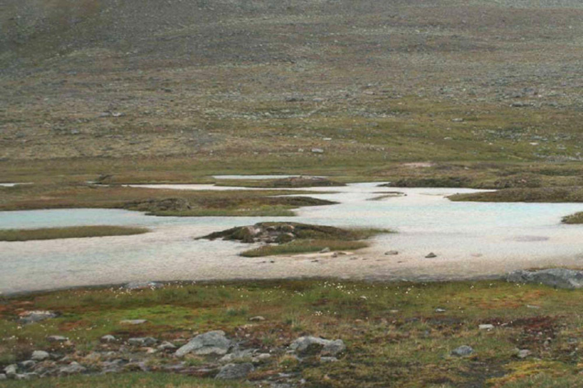 Palsmyr finnes kun i områder med permafrost. I Finnmark er myra på vei til å forsvinne.