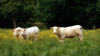 Landbruket trekkes inn i biogassprosjekt