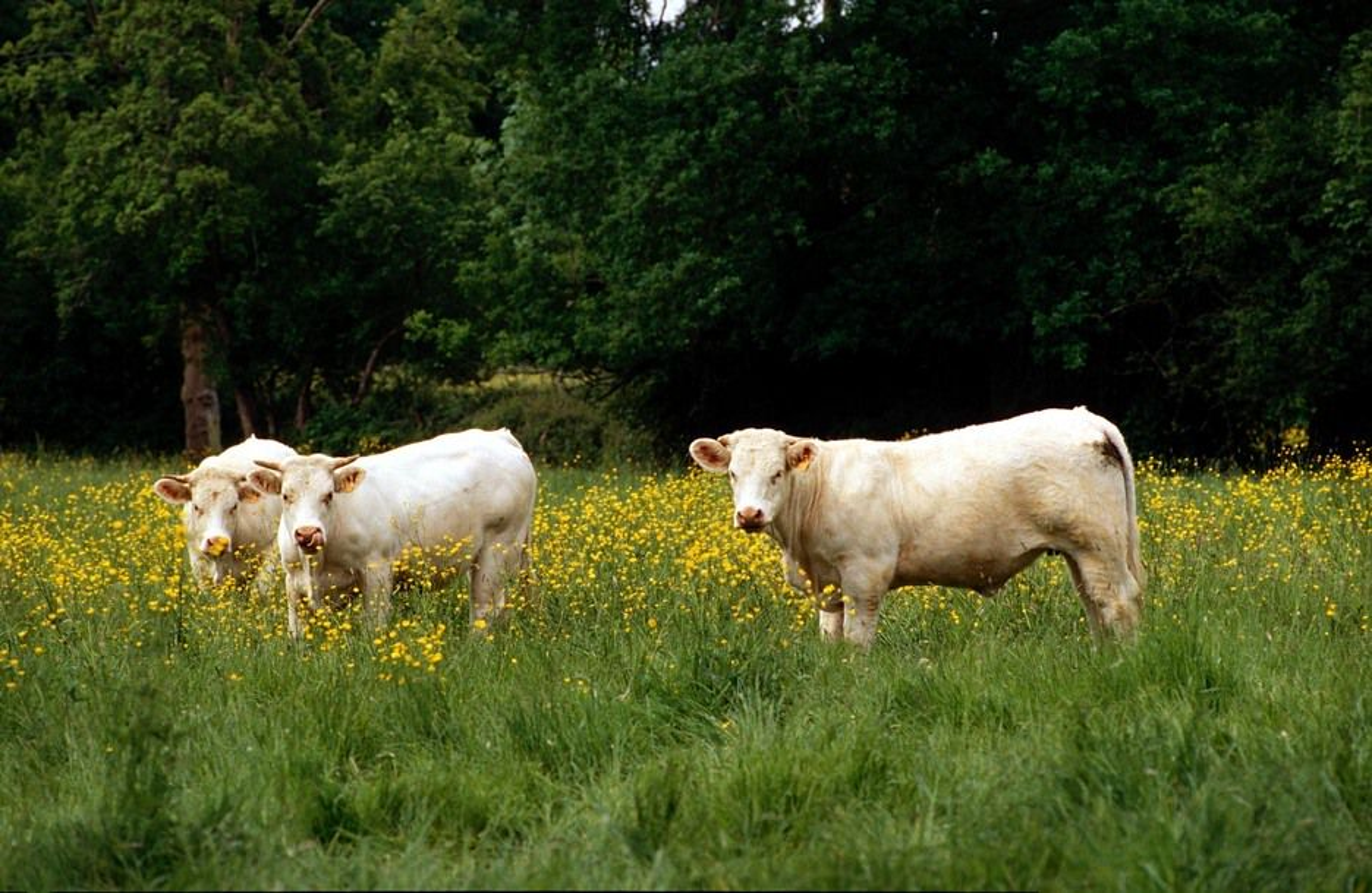 Vestfold Bondelag har fått 724.000 kroner fra staten for å utrede biogass fra landbruket.