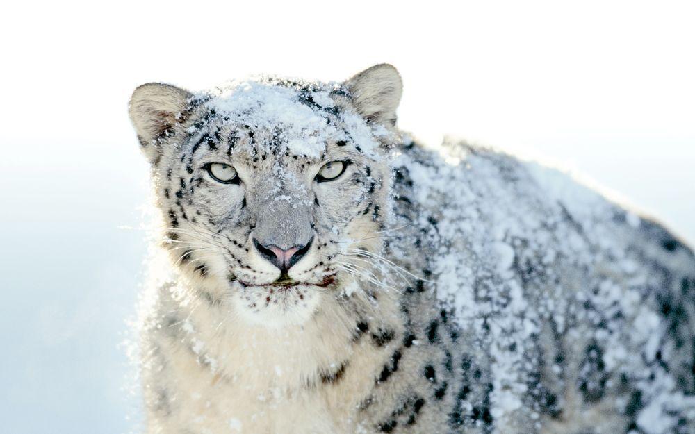 Ny, slankere og raskere Leopard
