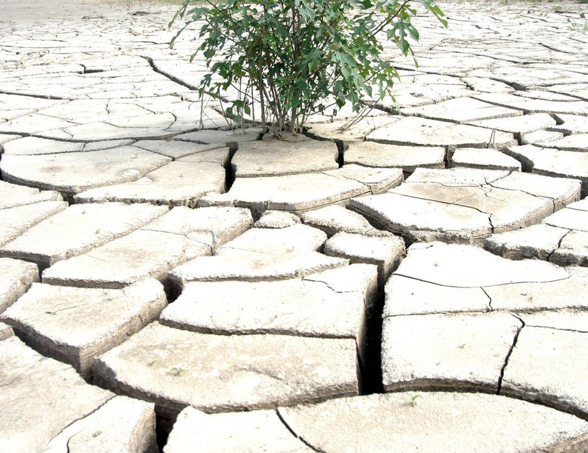 Tørke. Klima. Ørken.