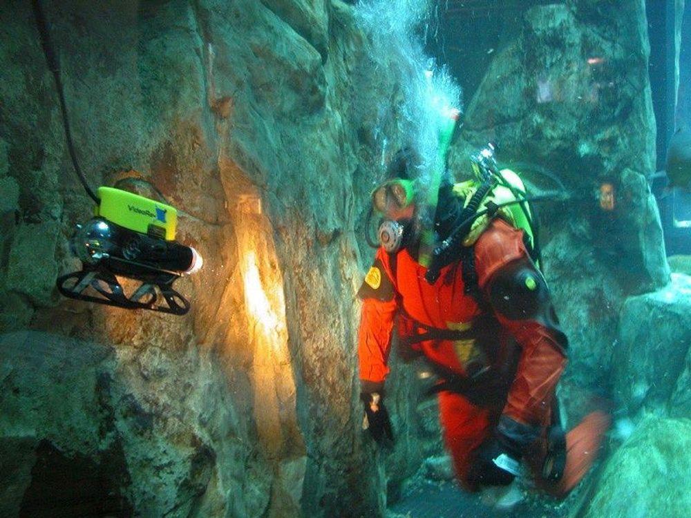 SAMSPILLROV og dykker i samspill. FOTO: VIDEORAY