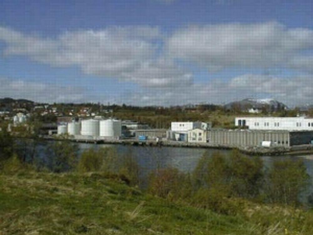 BARE TIL UTLANDET: Brødr Sunde A/S i Ålesund produserer ekspandertbart polystyren som inneholder HBCDD, et stoff som SFT vil ha inn på FNs verstingliste. over miljøgifter.